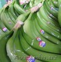 бананы производство и продажа - Изображение #2, Объявление #618582