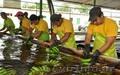 бананы производство и продажа - Изображение #5, Объявление #618582