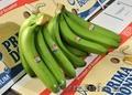 бананы производство и продажа, Объявление #618582